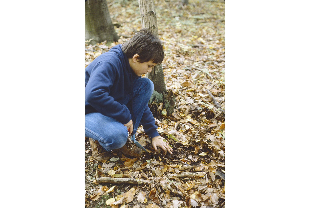 Im Wald meiner Kindheit, bei der Entnahme eines Setzlings